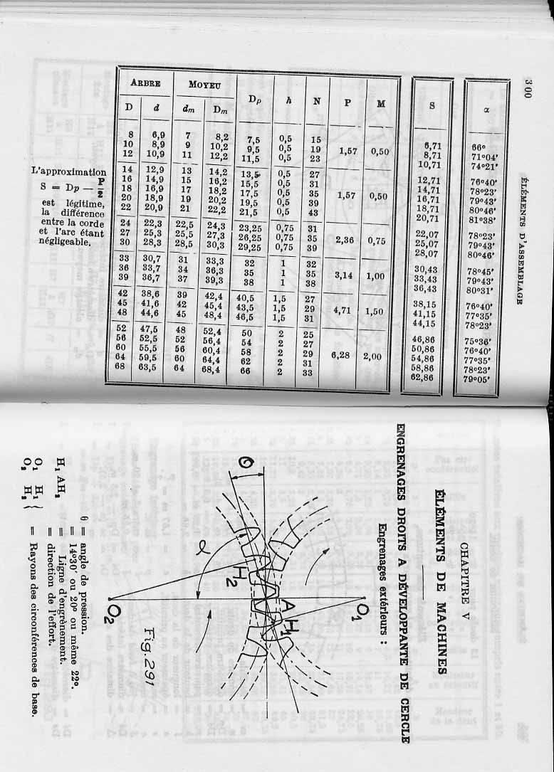 arbres-aileronnes-denteles-1.JPG