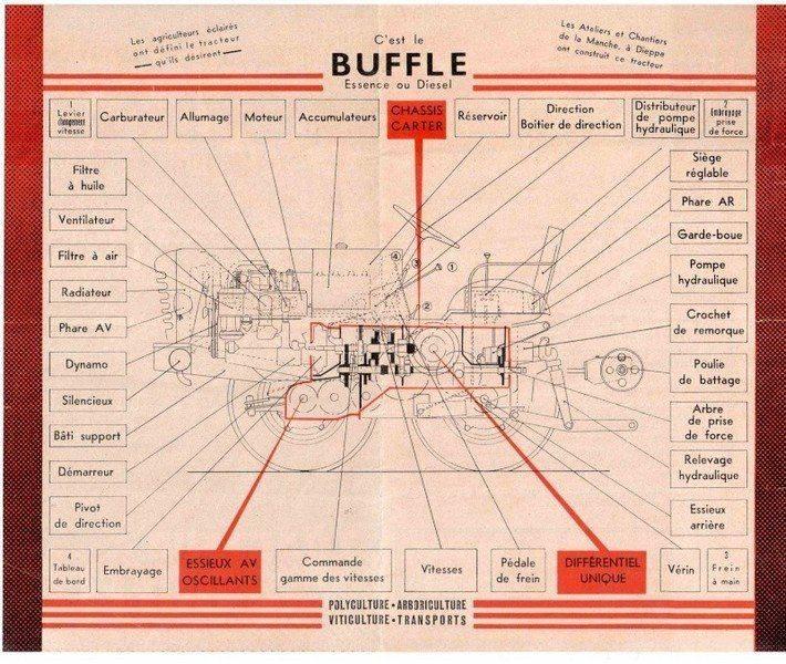 buffle11.jpg