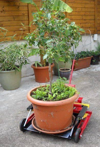 chariot_plante_10.jpg