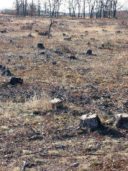 deforestation%20small.jpg