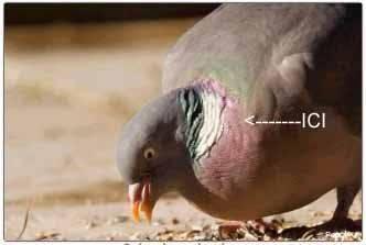 gorge de pigeonw .jpg
