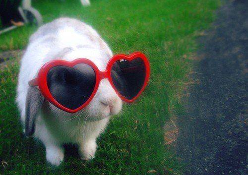 lunette-lapin.jpg